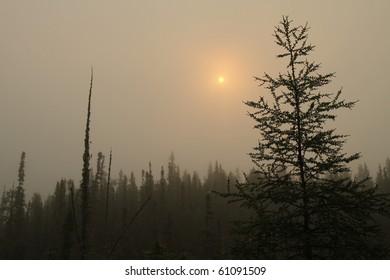 silhouette of tamarack at misty sunrise - alaska