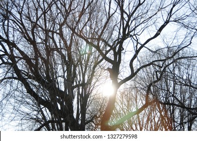 A silhouette of tangled bare tree branches hibernating in winter set against blue sky.