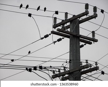 Silhouette of telephone poles and perching birds against a light grey background
