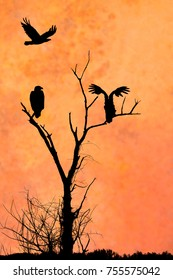 The silhouette of three eagles in front of an artistic orange evening sky. Two eagles are perched on a leafless tree silhouette tree while the third soars above the others.