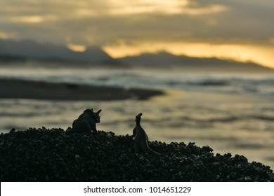 Silhouette of toy dinosaurs overlooking the waves on the Pacific Ocean in British Columbia, Canada near sunset.