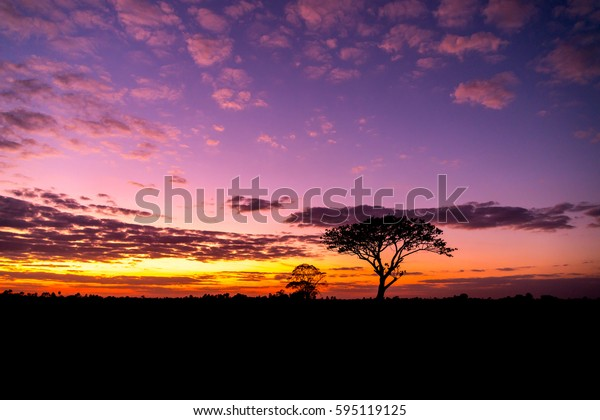silhouette tree in africa with sunset.Tree silhouetted against a setting sun.