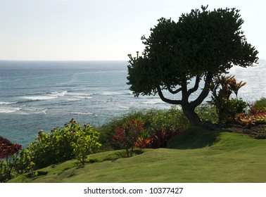 Silhouette of tree against Pacific Ocean