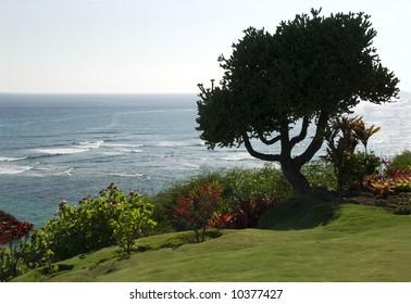 Silhouette of tree against Pacific Ocean