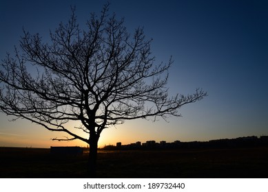 Silhouette of a tree against the setting sun