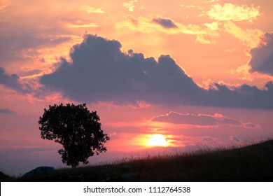 silhouette tree agaist colorful sky with clouds at the sunset, Montenegro