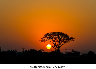 silhouette tree in asia with sunset.Tree silhouetted against a setting sun.colorful sunrise in the morning.