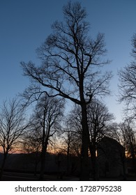 Silhouette of tree in autumm when sunset
