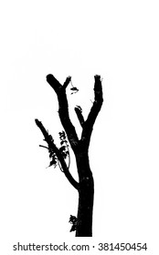Silhouette of tree in autumn
