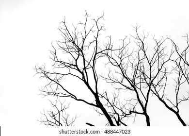 Silhouette tree backgrounds