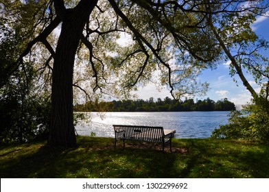 Silhouette of a tree and bench facing the lake