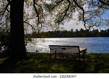Silhouette of a tree and bench facing the lake backgrounds