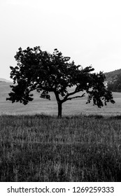 Silhouette of a tree in black and white