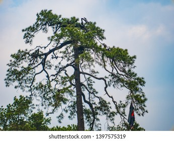 silhouette Tree with Blue sky on Phu Kradueng mountain national park in Loei City Thailand.Phu Kradueng mountain national park the famous Travel destination