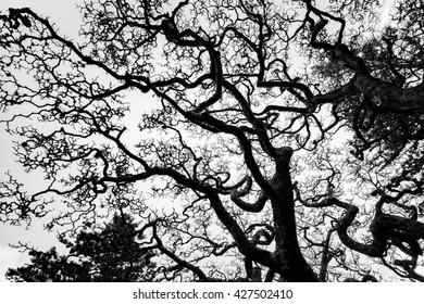 Silhouette Tree Branch with Black and White tone