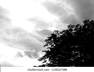 Silhouette of tree branch and leaves with grey sky in the garden. Abstract black and white of nature for background..