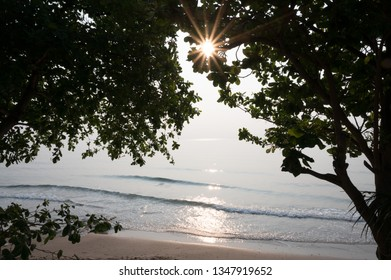 Silhouette of tree branch on the beach with sun light