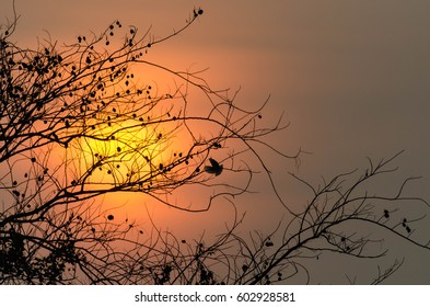 Silhouette tree branch and small bird flying in sunrise time