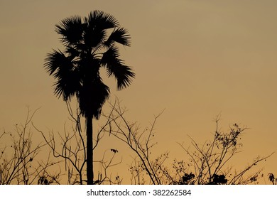 Silhouette tree and branch, sunset sky wallpaper background