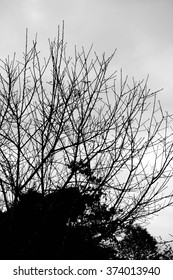 Silhouette of tree branches in gloomy day