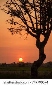 Silhouette of a tree with branches over the glowing orange color dark sunset.