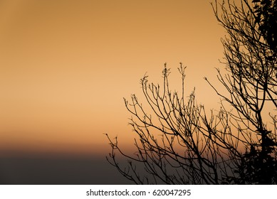 Silhouette of tree branches in the sunrise. Nature background.