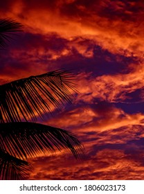 Silhouette of a tree branches in the sunset.