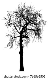 Silhouette of tree with branches,  winter scenery