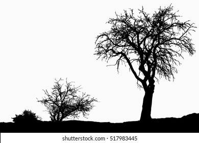 Silhouette of tree, bush with bare branches. Winter scenery trees afar landscape and black space for text, isolated