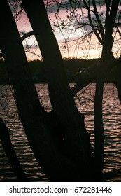 A silhouette of a tree by the water at sunset.