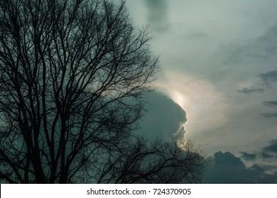 silhouette tree  with dark sky background