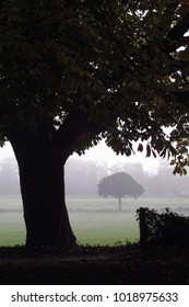 Silhouette of tree dominates the image with foggy haze covering field in background