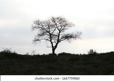 Silhouette of tree in dutch nature area at dusk