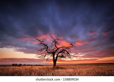 Silhouette of a tree in the Flinders Ranges, South Australia