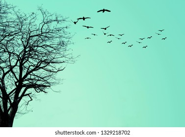 The silhouette of the tree and a flock of birds on a blue background.
