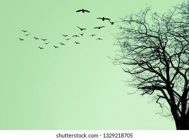 The silhouette of the tree and a flock of birds on a green background.