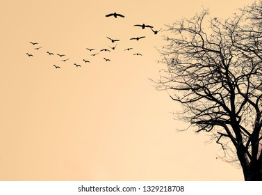 Silhouette of the tree and flock of birds on a yellow background.