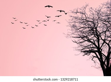 Silhouette of a tree and a flock of birds on a pink background.