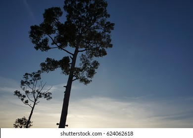 silhouette tree in forest