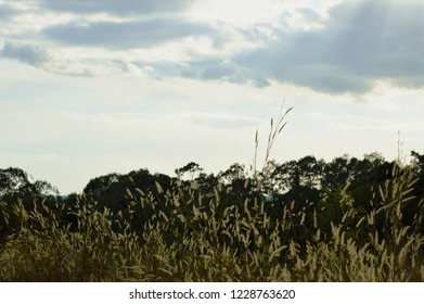 silhouette tree and grass flower blowing from wind on Khao Lon mountain in Thailand