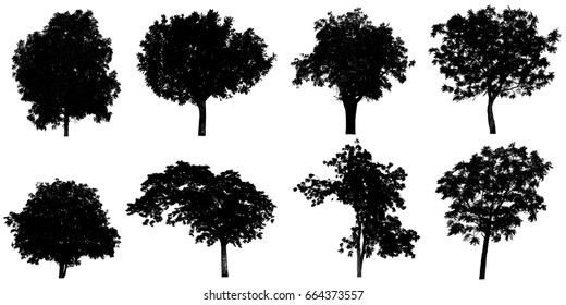 Silhouette tree Isolated on white background.