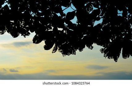 Silhouette of tree and leaf with sunset sky background