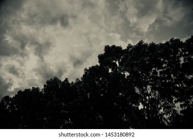 Silhouette tree leaves with dark cloudy sky background photo