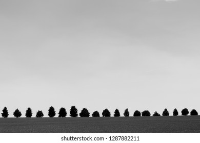 Silhouette of a Tree line on the horizon, the landscape in black and white