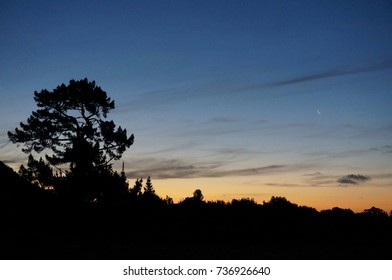 Silhouette of tree and moon