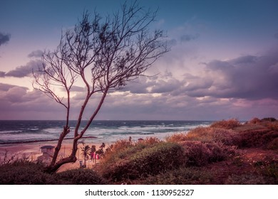 Silhouette of tree on background of sea and clouds, Netanya, Israel