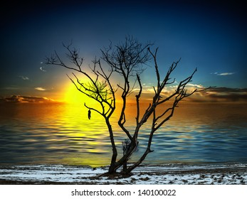 Silhouette of a tree on the beach in front of the setting sun