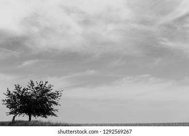 Silhouette of a tree on the horizon, black and white