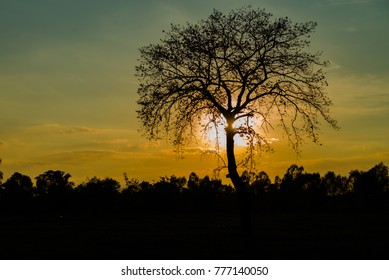 Silhouette tree On the sunset background, Color of a twilight sky Beauty Evening colorful clouds - sunlight with dramatic sky on dark background.