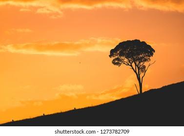 Silhouette of Tree in Orange Sunset
